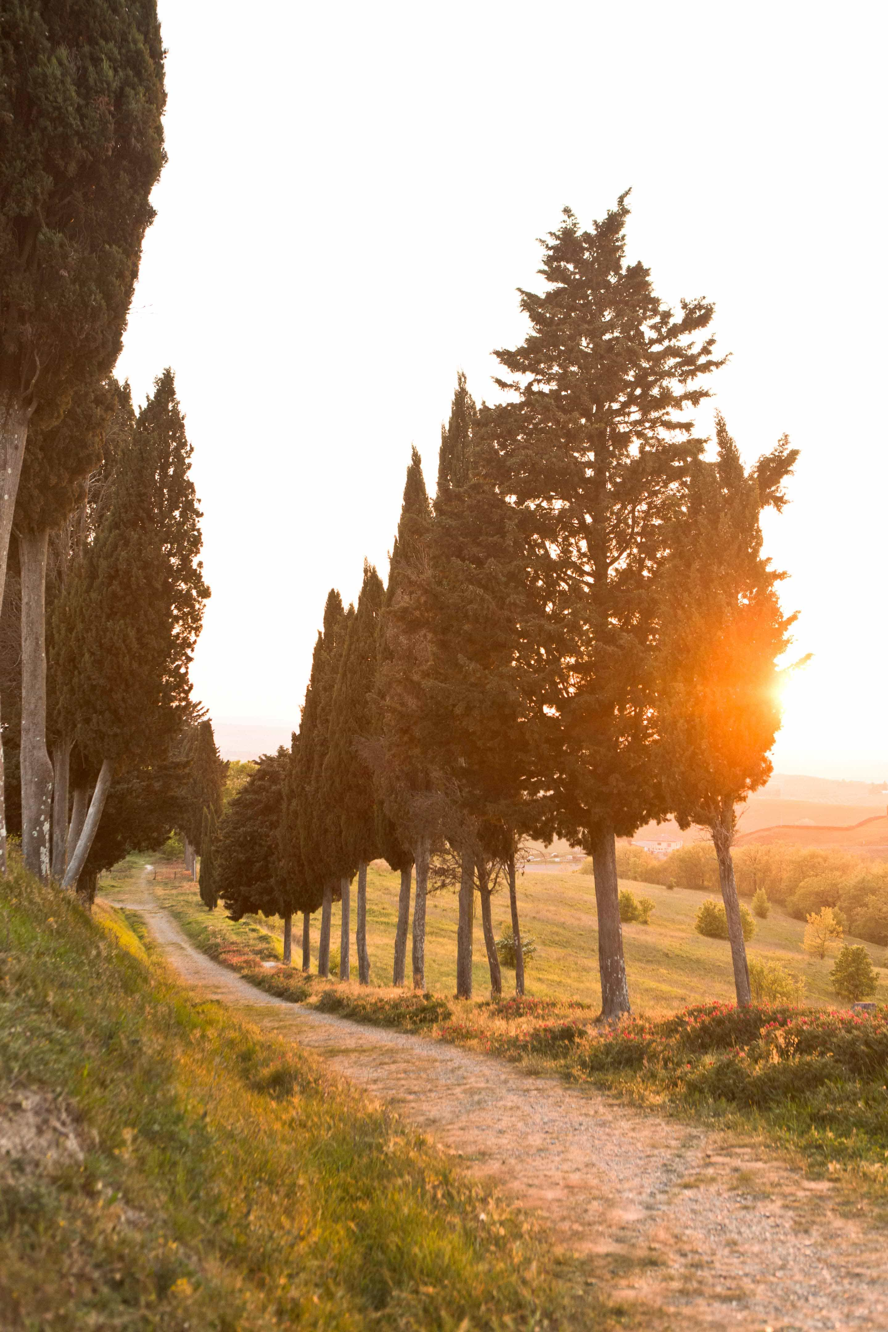 the scenery of tuscany at sunset